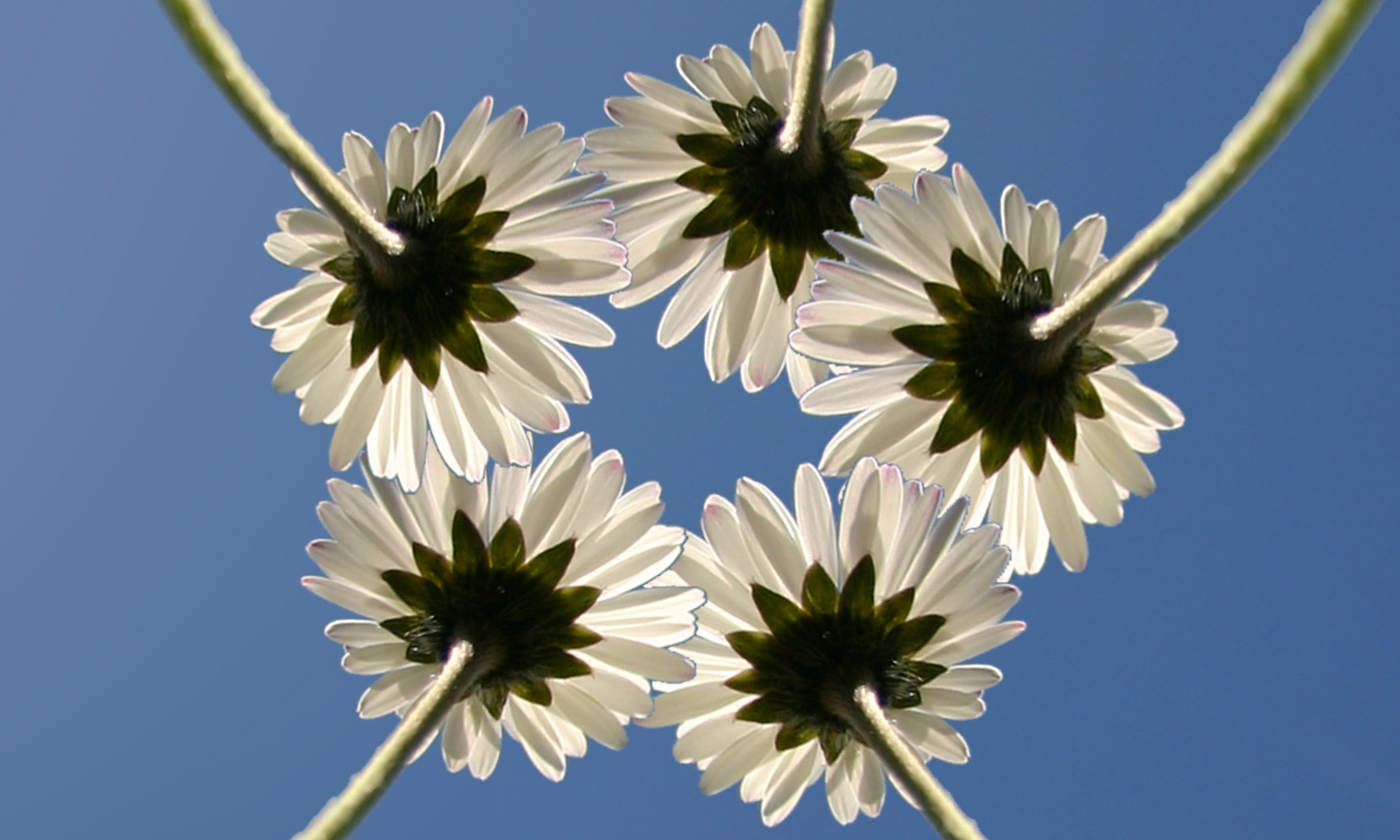bloem-samen
