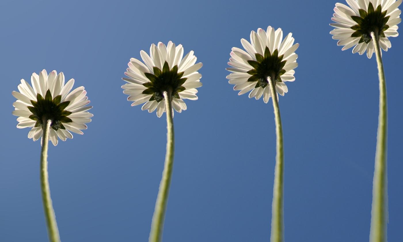 bloemen-los-home-1