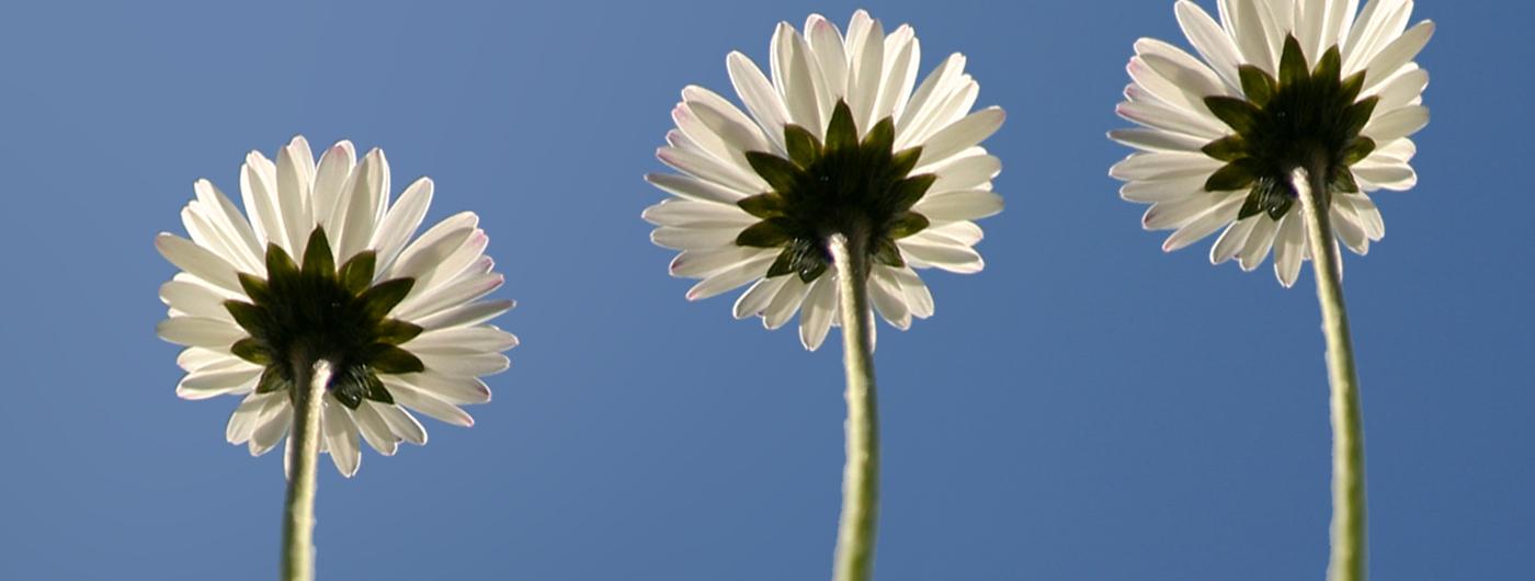 bloemen-los-sub