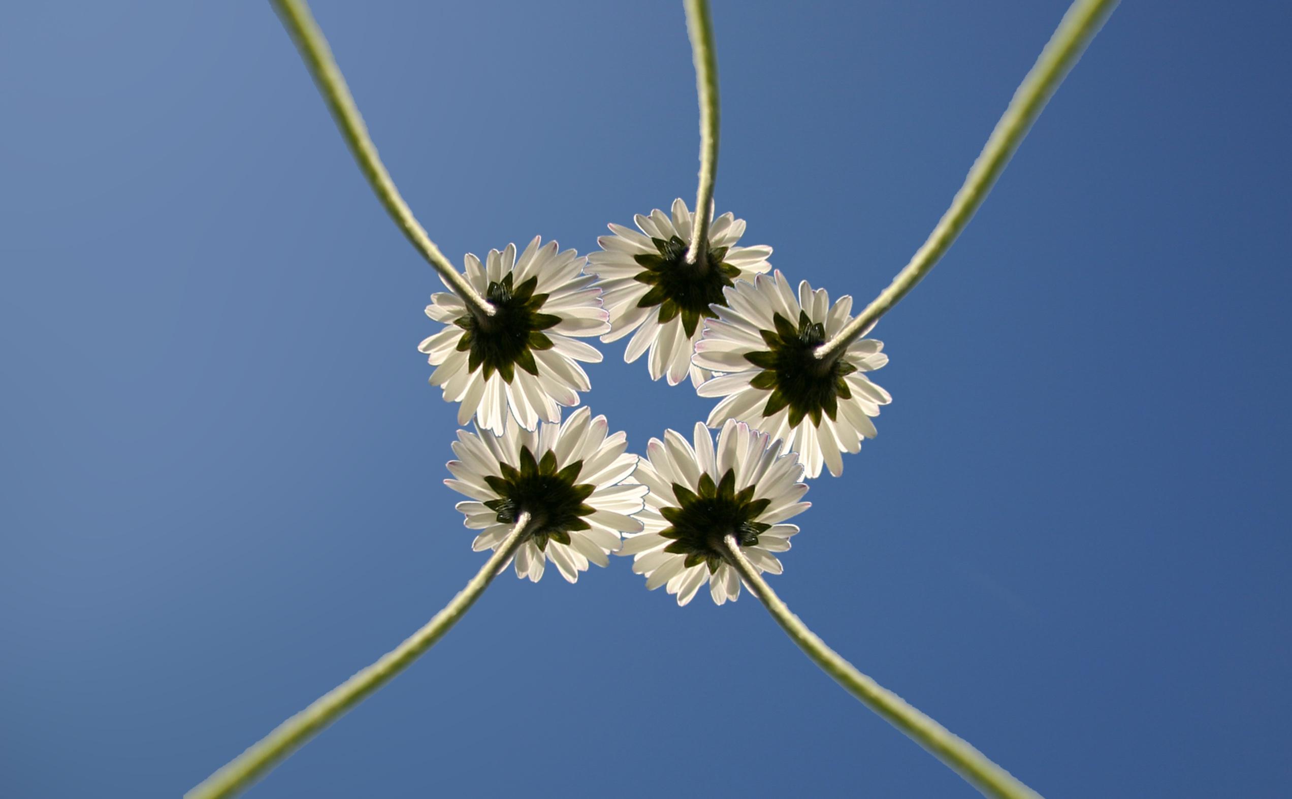 bloemenbijelkaar